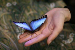 Корпоратив. Экзотические бабочки на празднике