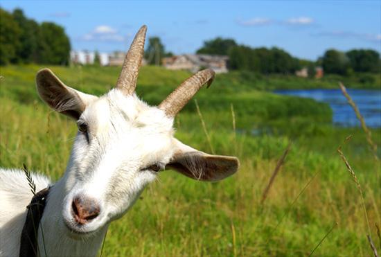 Год синей зеленой деревянной козы