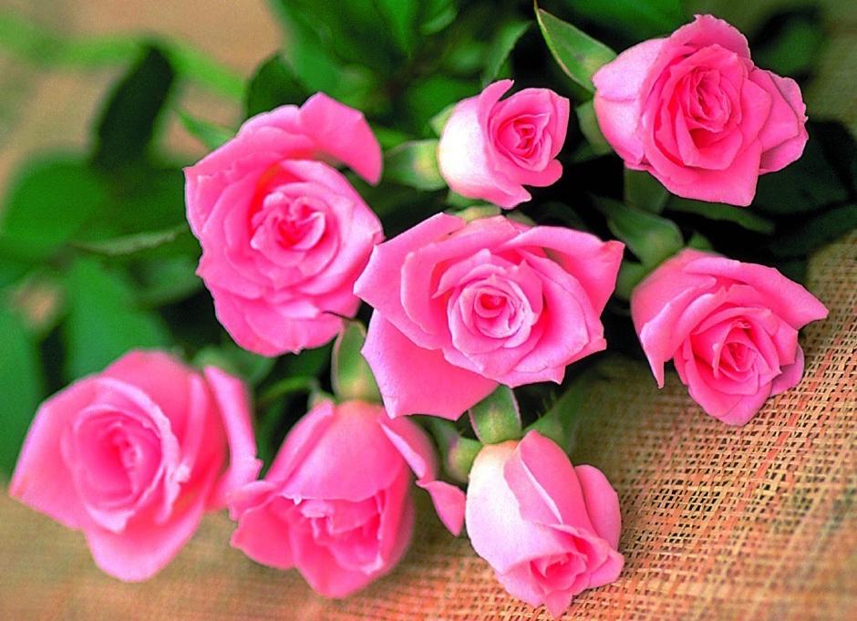Какие цветы подарить учителю на 1