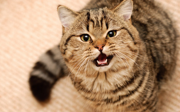 Кастрация котов плюсы и минусы