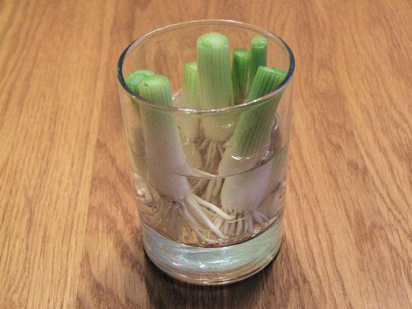 Как вырастить овощи дома? Что можно вырастить на подоконнике?