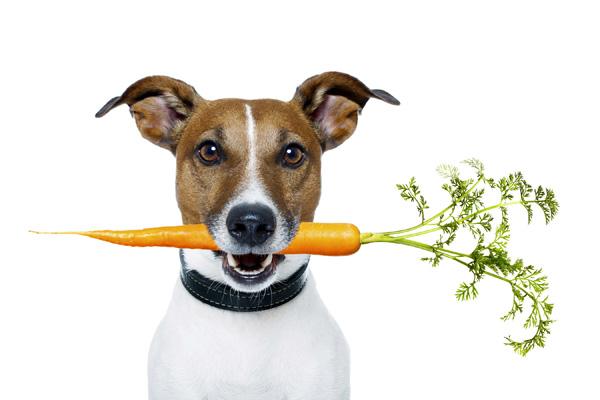 Собаки, лечащие депрессию и стресс