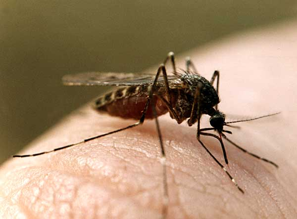Отпугиватель комаров. Лучшие средства от комаров