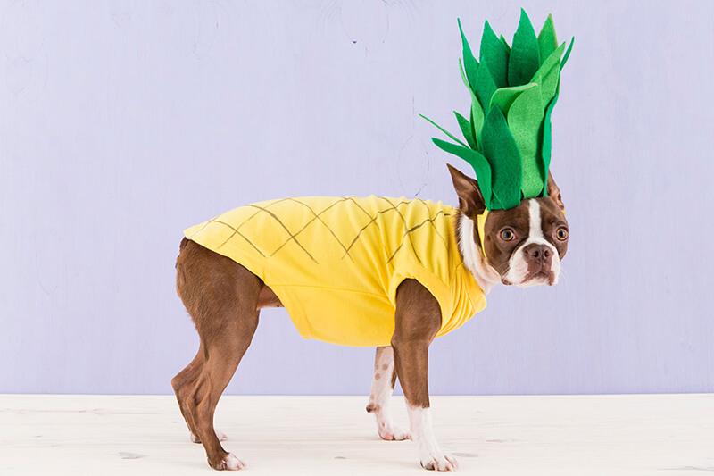 Карнавальные костюмы для собак: фото, костюмы для собак, костюм собаки своими руками