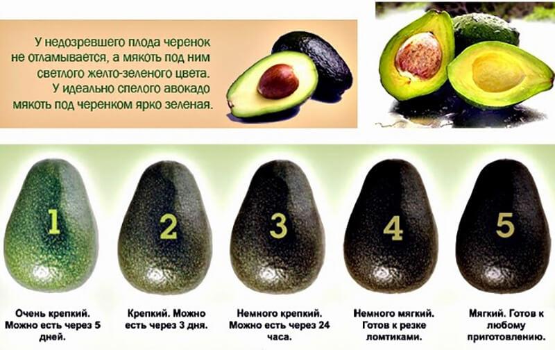 Как хранить авокадо в домашних условиях 620