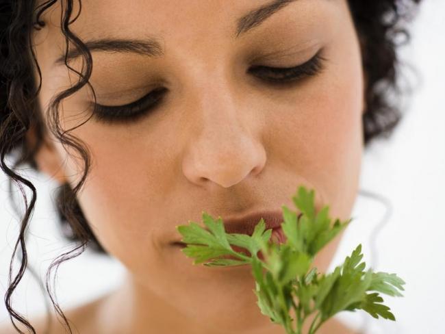 Польза сельдерея и петрушки: полезные свойства и противопоказания
