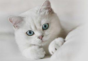 Корм для кошек. Какой сухой корм выбрать для кошки?