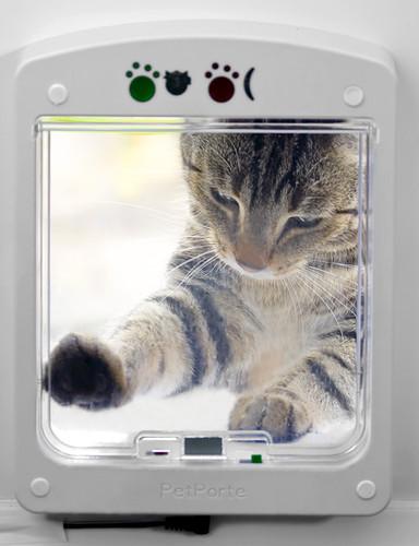 Дверцы для кошек, гуляющих самих по себе