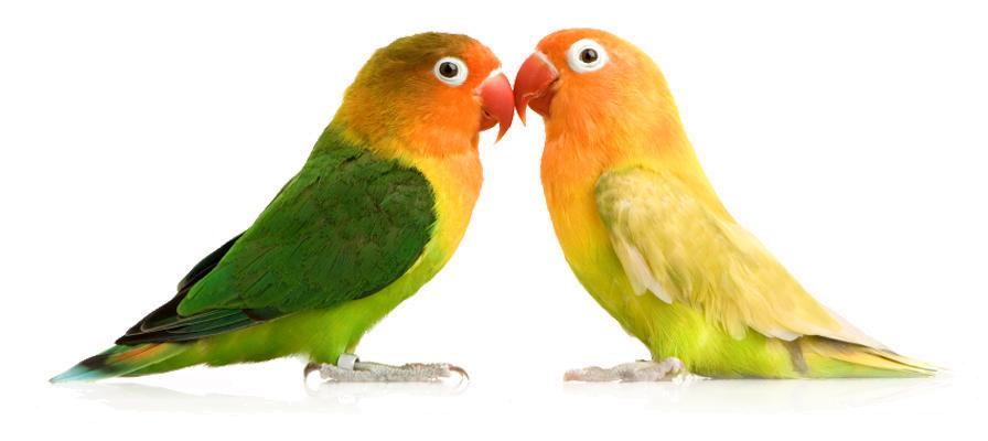 Как назвать попугая? Имена для попугаев мальчиков и девочек