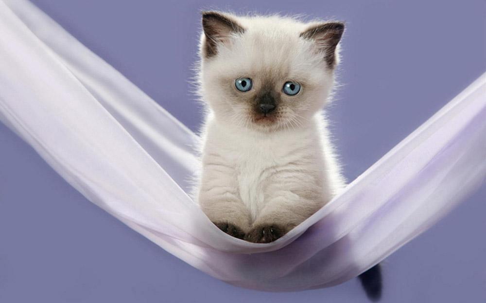 Как назвать кота? Красивые и оригинальные кошачьи имена