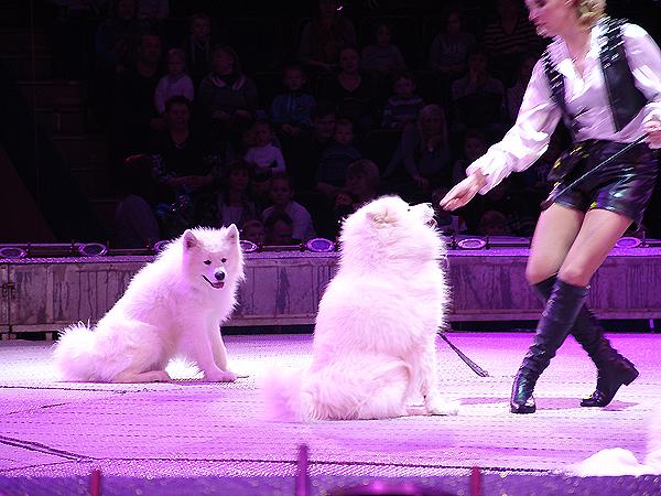 Цирк-шоу гигантских фонтанов в Минске: программа, отзывы и фото