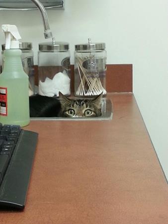 Кот спрятался. Кошки и коты, которые думают, что спрятались
