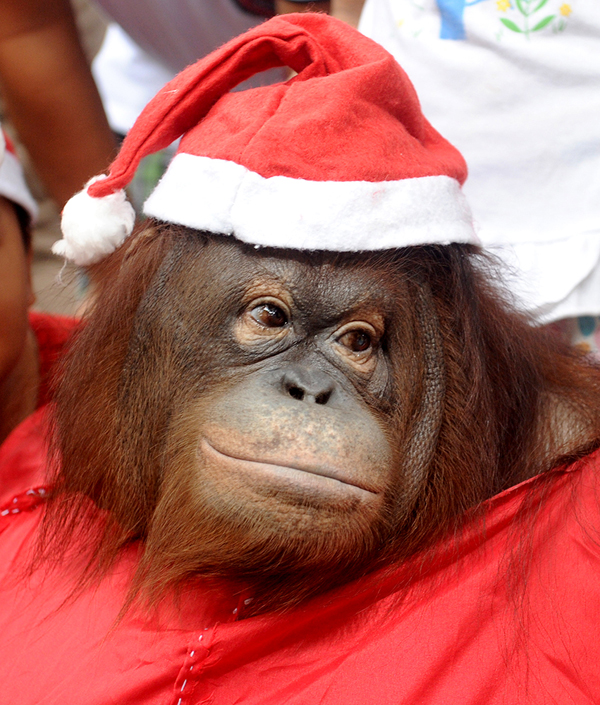 Новогодняя обезьяна. Новогодняя Обезьяна 2016