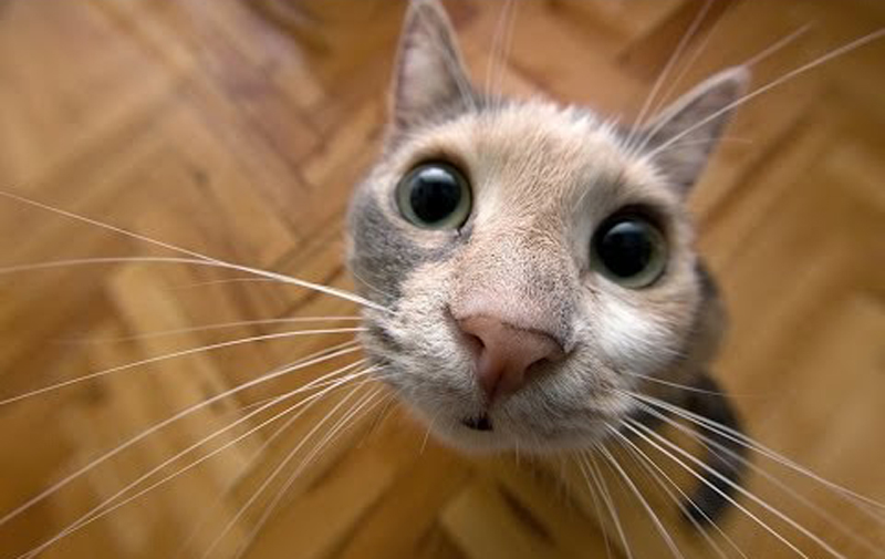 Новым, кошка смешное картинки
