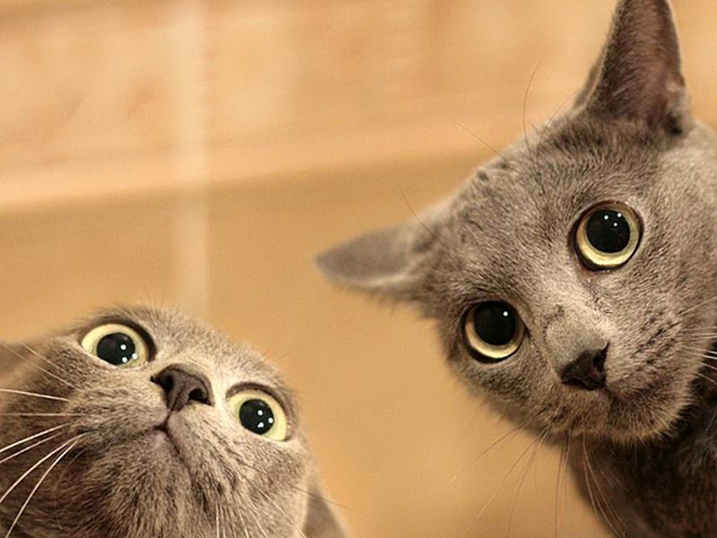 Смешные кошки до слез: gif картинки, которые создают настроение