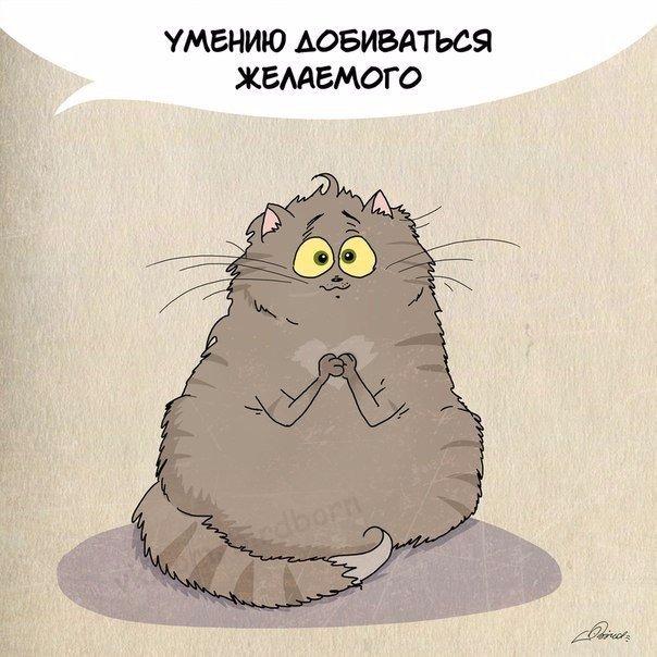Чему можно поучиться у кота?