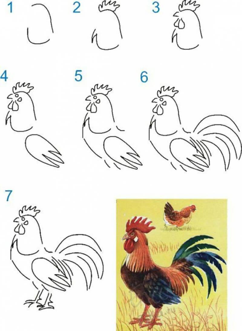Как нарисовать Петуха поэтапно карандашом: схемы, видео уроки