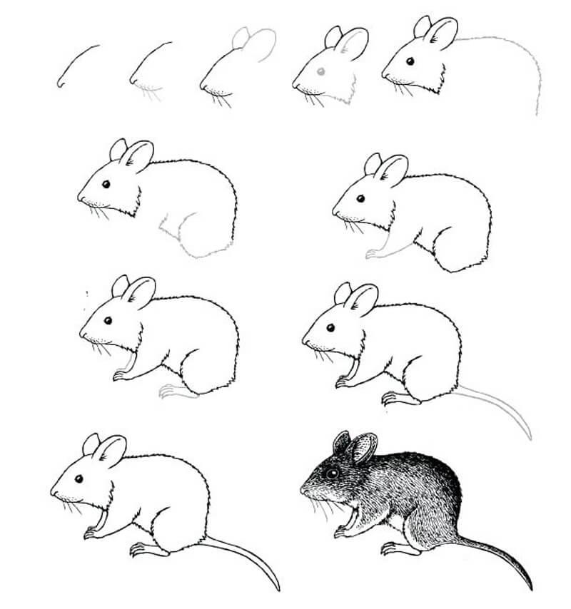 Картинки как рисовать мышь поэтапно главное